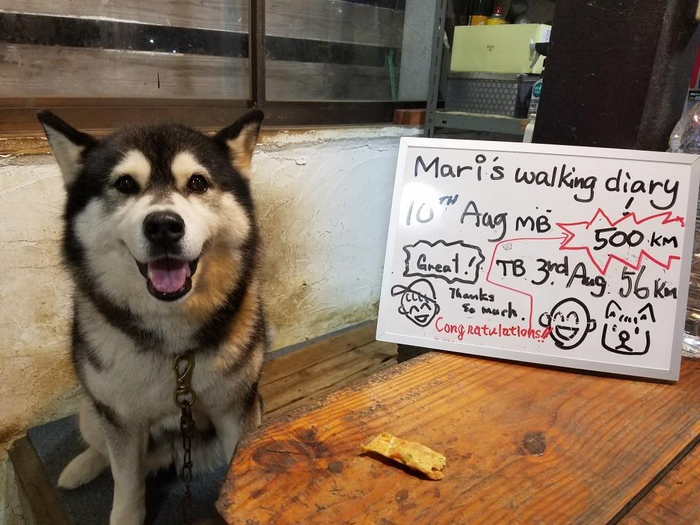 500km so far with my borrowed  dog, Mari